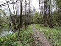 Pěšina přes chráněné území Kenický po pravém břehu řeky Moravy.