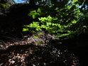 Sluncem zalité bukové listy pod Klokočskými průchody.