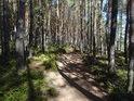 Je zřejmé, že bor tento byl uměle vysázen, v přirozeném lese se vyskytují všechna stáří stromů.