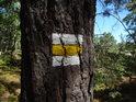 Žlutá turistická značka na borovici.