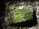 Mech na kameni uprostřed temného lesa, však Sluncem osvícený.