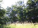 Jak jen vyjádřit tu vůni letní louky na pokraji lesa...