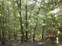 Les na Kněží hoře.