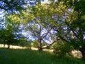 Mezi loukou a lesem.