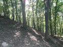 Lesní svah na Kněží hoře.