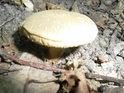 Dokonce i uprostřed léta tu mohou houbaři dojít naplnění své záliby.