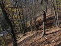 Jak vidno, i dub se může zlomit, u lesních kmenů, které nemohou růst do šířky, je to pravděpodobnější.