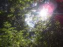 Lužní Slunce o babím létě.