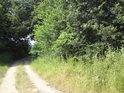 Vpravo vedle cesty, za stromy, již je tůň.