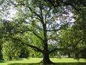 Některé stromy, jako by přímo mluvily.