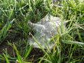 Pavučina je ozdobená ranní rosou, snad čeká na něžnou nožku bosou.