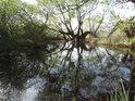 Temná tůň na levém břehu řeky Opavy u Kravař se na jaře probouzí k životu.