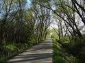 Silnice jako když střelí, v krásných jarních barvách vede od Kravař k řece Opavě.