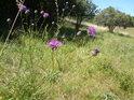 Pokud pcháče kvetou, tak jsou nádherné, když se však chytí svetru, je to horší...