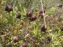 Na suchých loukách najdeme rozmanité rostlinstvo.