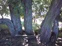 Zvláštní světelné podmínky uprostřed parného slunečného dne pod korunami stromů Kozí horky.