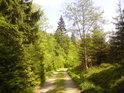 Cesta podél řeky Moravy pod Králickým Sněžníkem.