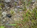 Detail brouka na horském kameni se svěží travou.