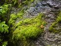 Slabý vodní tok se ubírá přes mechem obrostlý kámen.