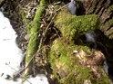 Mechy vyloženě žijí ze starého dřeva.