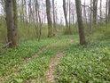 Pohled do jarního lesa.