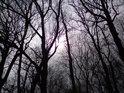 Když Slunce prosvětlí stromy bez listí.