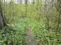 Lesní pěšiny jsou zjara dobře znát.