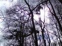 Když Slunce svítí za korunami stromů, obalenými jmelím, mohou přicházet velké myšlenky.