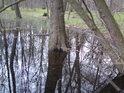 Chvíli je tu mokro, pak zase menší, bažiny lužního lesa však zůstávají.
