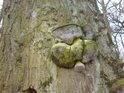 Houby na kmenech stromů zelenají a samy jsou napadány.