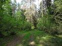 Lesní cesta k mokřadu.