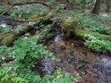 Lesní potůček s přirozenými překážkami.