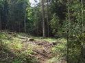Malá lesní paseka.