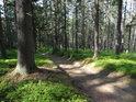 Poměrně slušná lesní cesta je dosti vyjetá.