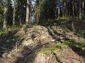 Rozrytý lesní svah.