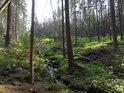 Nádherný lesní potůček.
