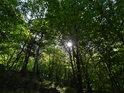 Mladými buky porostlý kamenný svah a za listy prosvítá Slunce.