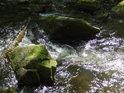 Voda v Chrudimce si nachází cestu mezi kameny, třeba s příslovečnými klacky pod nohama.