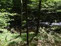 Řeka Chrudimka je v chráněném území Krkanka nádherná a jeví s jako nespoutaná, přestože to tu je vlastně mezi přehradou Křižanovice a její vyrovnávací nádrží.