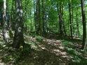 Lesní cesta podél Chrudimky, tedy zrovna poněkud výše nad ní.