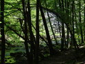 Ohnuté stromy nad cestou necestou po pravém břehu Chrudimky v Krkance.