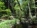 Je vidět, že Debrný potok mívá někdy průtok mnohokrát vyšší a ten pak utváří vlastní koryto.