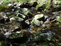 Po kamenech klidně poskakující voda Debrného potoka.