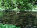 Zklidněný tok řeky Chrudimka ve východní části chráněného území.