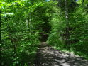Lesní pěšina vlastně tvoří hranici mezi dvěma chráněnými územími, nalevo Krkanka, napravo Strádovské peklo.