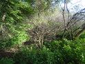Uschlé křoví kontrastuje s živým podrostem i okolími živými keři.