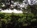 Slunce proniká na kraj lesa.
