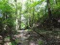 Malý bahnitý potůček má své malé zalesněné údolí.