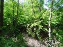 Pohled shora do malého údolí, kam listy paprskům jen málo dostat se dovolí.