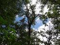 Průzor na oblohu přes polosuchý strom.